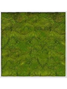 Mosschilderij, Aluminium 100% Bolmos, L: 100cm, H: 6cm, B: 100cm