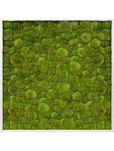 Mosschilderij, Aluminium 100% Platmos, L: 100cm, H: 6cm, B: 100cm