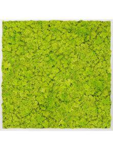 Mosschilderij, Aluminium 100% Rendiermos (Lentegroen), L: 100cm, H: 6cm, B: 100cm