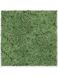 Mosschilderij, Aluminium 100% Rendiermos (Mosgroen), L: 100cm, H: 6cm, B: 100cm