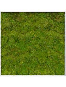 Mosschilderij, Aluminium 100% Bolmos, L: 120cm, H: 6cm, B: 120cm