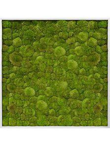 Mosschilderij, Aluminium 100% Platmos, L: 120cm, H: 6cm, B: 120cm