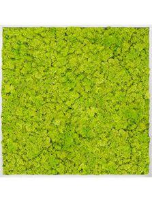 Mosschilderij, Aluminium 100% Rendiermos (Lentegroen), L: 120cm, H: 6cm, B: 120cm