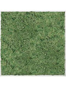 Mosschilderij, Aluminium 100% Rendiermos (Mosgroen), L: 120cm, H: 6cm, B: 120cm