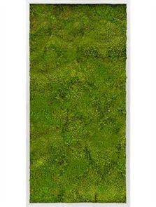 Mosschilderij, Aluminium 100% Bolmos, L: 60cm, H: 6cm, B: 120cm