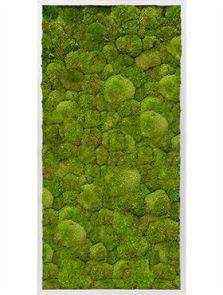 Mosschilderij, Aluminium 100% Platmos, L: 120cm, H: 6cm, B: 60cm