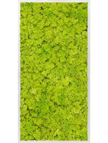 Mosschilderij, Aluminium 100% Rendiermos (Lentegroen), L: 60cm, H: 6cm, B: 120cm