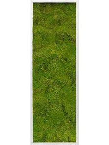 Mosschilderij, Aluminium 100% Bolmos, L: 40cm, H: 6cm, B: 120cm