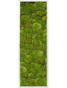 Mosschilderij, Aluminium 100% Platmos, L: 120cm, H: 6cm, B: 40cm