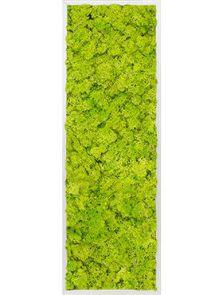 Mosschilderij, Aluminium 100% Rendiermos (Lentegroen), L: 120cm, H: 6cm, B: 40cm
