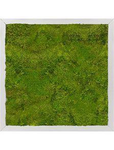 Mosschilderij, Aluminium 100% Bolmos, L: 40cm, H: 6cm, B: 40cm