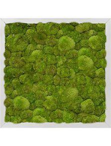 Mosschilderij, Aluminium 100% Platmos, L: 40cm, H: 6cm, B: 40cm
