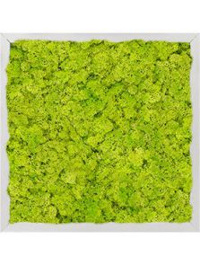 Mosschilderij, Aluminium 100% Rendiermos (Lentegroen), L: 40cm, H: 6cm, B: 40cm