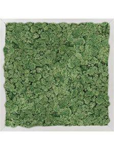 Mosschilderij, Aluminium 100% Rendiermos (Mosgroen), L: 40cm, H: 6cm, B: 40cm