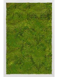 Mosschilderij, Aluminium 100% Bolmos, L: 40cm, H: 6cm, B: 60cm