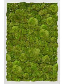 Mosschilderij, Aluminium 100% Platmos, L: 40cm, H: 6cm, B: 60cm