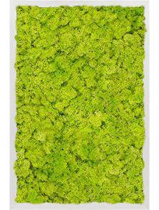 Mosschilderij, Aluminium 100% Rendiermos (Lentegroen), L: 60cm, H: 6cm, B: 40cm