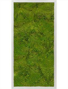Mosschilderij, Aluminium 100% Bolmos, L: 40cm, H: 6cm, B: 80cm