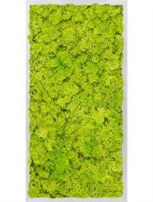 Mosschilderij, Aluminium 100% Rendiermos (Lentegroen), L: 40cm, H: 6cm, B: 80cm