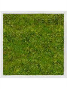 Mosschilderij, Aluminium 100% Bolmos, L: 50cm, H: 6cm, B: 50cm