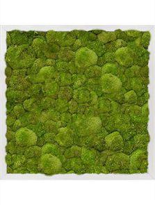 Mosschilderij, Aluminium 100% Platmos, L: 50cm, H: 6cm, B: 50cm