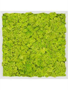 Mosschilderij, Aluminium 100% Rendiermos (Lentegroen), L: 50cm, H: 6cm, B: 50cm