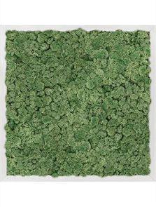 Mosschilderij, Aluminium 100% Rendiermos (Mosgroen), L: 50cm, H: 6cm, B: 50cm
