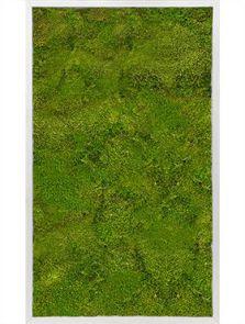 Mosschilderij, Aluminium 100% Bolmos, L: 100cm, H: 6cm, B: 60cm