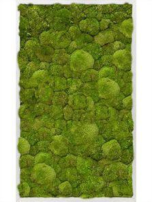 Mosschilderij, Aluminium 100% Platmos, L: 60cm, H: 6cm, B: 100cm