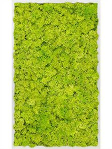 Mosschilderij, Aluminium 100% Rendiermos (Lentegroen), L: 60cm, H: 6cm, B: 100cm