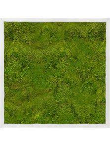 Mosschilderij, Aluminium 100% Bolmos, L: 60cm, H: 6cm, B: 60cm