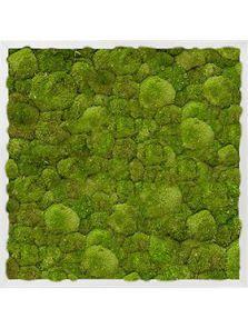 Mosschilderij, Aluminium 100% Platmos, L: 60cm, H: 6cm, B: 60cm