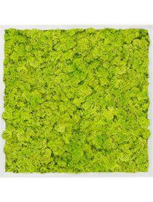 Mosschilderij, Aluminium 100% Rendiermos (Lentegroen), L: 60cm, H: 6cm, B: 60cm