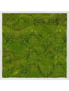 Mosschilderij, Aluminium 100% Bolmos, L: 70cm, H: 6cm, B: 70cm