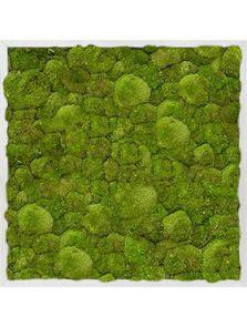 Mosschilderij, Aluminium 100% Platmos, L: 70cm, H: 6cm, B: 70cm