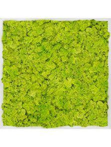 Mosschilderij, Aluminium 100% Rendiermos (Lentegroen), L: 70cm, H: 6cm, B: 70cm