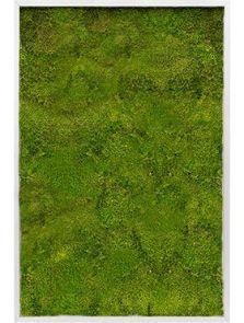 Mosschilderij, Aluminium 100% Bolmos, L: 120cm, H: 6cm, B: 80cm
