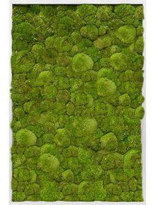Mosschilderij, Aluminium 100% Platmos, L: 80cm, H: 6cm, B: 120cm