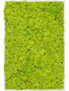 Mosschilderij, Aluminium 100% Rendiermos (Lentegroen), L: 120cm, H: 6cm, B: 80cm