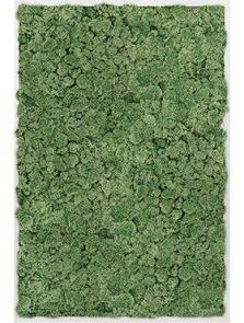 Mosschilderij, Aluminium 100% Rendiermos (Mosgroen), L: 120cm, H: 6cm, B: 80cm