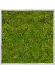 Mosschilderij, Aluminium 100% Bolmos, L: 80cm, H: 6cm, B: 80cm