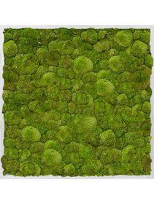 Mosschilderij, Aluminium 100% Platmos, L: 80cm, H: 6cm, B: 80cm