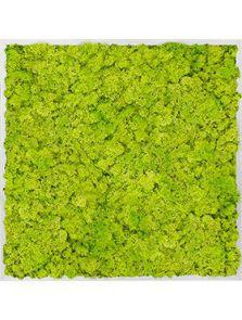 Mosschilderij, Aluminium 100% Rendiermos (Lentegroen), L: 80cm, H: 6cm, B: 80cm