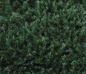 Conifeer Groen, B: 50cm, L: 50cm, UV & Waterproof