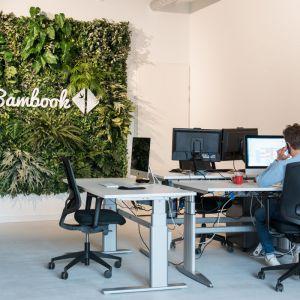 Bambook Plantenwand