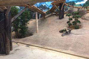 Pandasia Ouwehands Dierenpark