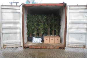 Booreiland met kunstplanten